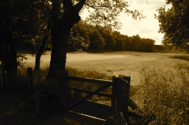 The view of the 2nd green - looking back from the road crossing.