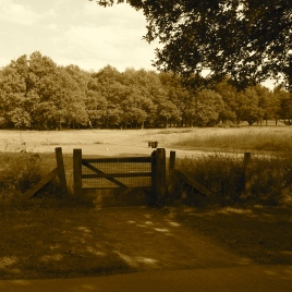 The view of the gate and 3rd tee beyond from the road which bisects the golf course.