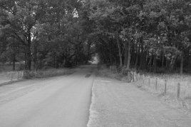 The view of the road which bisects the golf course - looking north.
